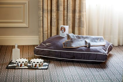 Dog Friendly Hotel | The Jefferson, Washington, DC
