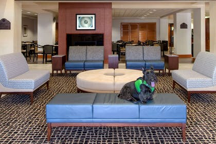 Pet Friendly | Wingate by Wyndham Chantilly / Dulles Airport