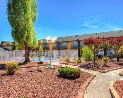 Beautiful local foliage | Rodeway Inn And Suites Flagstaff
